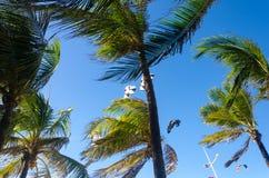 Kiteboarding se cierra para arriba detrás de árboles y del cielo azul Imagenes de archivo