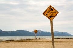 Kiteboarding trädrake som surfar tecknet på stranden Fotografering för Bildbyråer