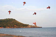 Kites. Landscape with kites flying over the shore in the evening Royalty Free Stock Photography