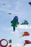 Kites against a blue sky Royalty Free Stock Photo