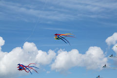 Kites on a blue sky Stock Photo