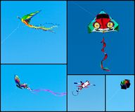 Kites Collage Royalty Free Stock Photos