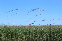 Kites in a cornfield on a saturday afternoon. stock images