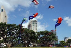 Kites in the park Stock Image