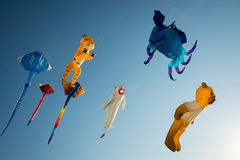 Kites Stock Photos