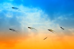 Kites in the sky Stock Photos