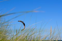 Kitesurfen. By good weather and the coast Royalty Free Stock Photo