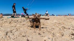 Kitesurfers in Tarifa royalty free stock image