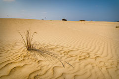 Kitesurfing près de dune Photos libres de droits