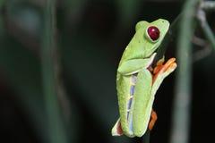 Kitschiger Blatt-Frosch Stockfoto