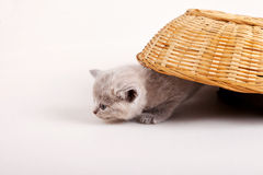 Kittan under basket Royalty Free Stock Photography