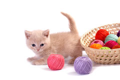 The kitten Royalty Free Stock Photography