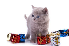 The kitten Stock Photography