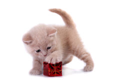The kitten Stock Images