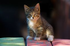 Kitten. In shadow royalty free stock images