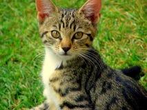 Free Kitten Royalty Free Stock Photography - 10780307