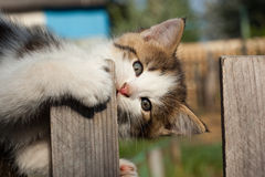 Kitten. The small amusing gnaws a wooden fence Royalty Free Stock Photos