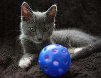Kitten. Portrait shot of a Silver Gray Kitten Stock Images