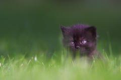 Kitten. Little kitten sitting in the grass Royalty Free Stock Images