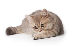 Kitten Stock Photos