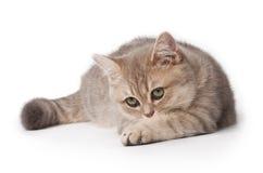 Kitten. Curious kitten on white background Stock Photos