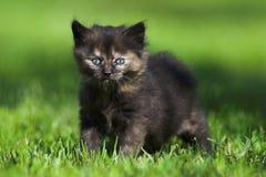 Kitten. Little kitten sitting in the grass Royalty Free Stock Photography