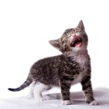 Kitten. Young cat in my studio Stock Photo