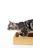 Kitten Stock Photography
