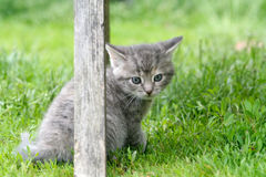 Kitten. Grey kitten in the garden Royalty Free Stock Photo