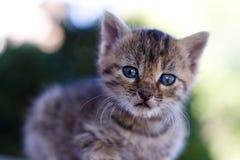Free Kitten Royalty Free Stock Images - 12424409