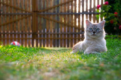 Kitten. Laying in the grass (shallow depth of field Royalty Free Stock Image