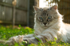 Kitten. Playing in the grass (shallow depth of field Royalty Free Stock Photos