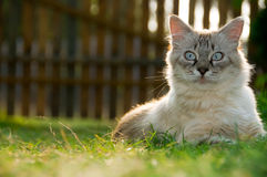 Free Kitten Royalty Free Stock Photography - 12867297