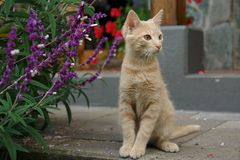 The kitten. Sitting near house Stock Photography