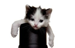 Kitten. A little fluffy kitten sits with a sad kind Royalty Free Stock Photography