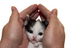 Kitten. A little fluffy kitten sits with a sad kind stock photo