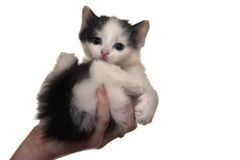 Kitten. A little fluffy kitten sits with a sad kind Royalty Free Stock Image