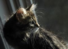 Kitten. A kitten in a window with all kinds of light from outside bouncing off the fur stock photography