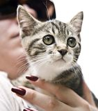 Kitten Royalty Free Stock Photo