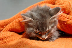 The kitten. Siting under orange sweater stock photo