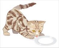 Kitten. Small kitten drinks milk from a saucer stock illustration