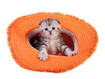 The kitten Royalty Free Stock Photos