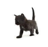 The kitten Royalty Free Stock Photos
