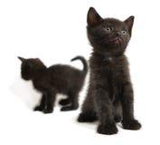 Kitten. The black kitten looks upward Royalty Free Stock Photo