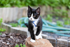 Kitten. A beautiful little kitten exploring the wonders of a back garden Stock Photos