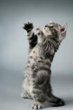 Kitten Stock Photo