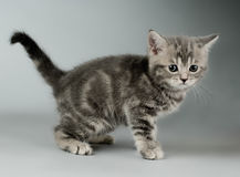 Kitten Stock Photo