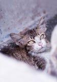 Kitten 2 stock photos