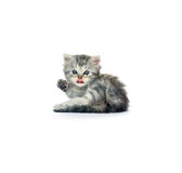 Kitten 2. Little grey kitten who is located on a white background Stock Images