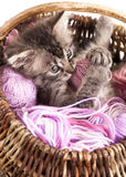 Kitten. Plays   in a basket of balls of yarn Stock Photo